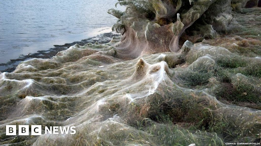 Giant spider-web cloaks land in Aitoliko, Greece - BBC News
