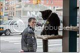 photo Catcafe-19_zps14469f19.jpg