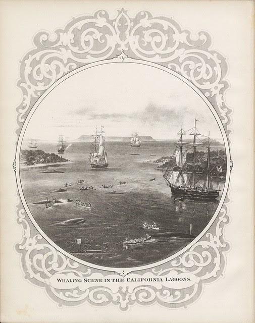 whaling - whales - sea mammals - cetacea - title page embellishment - border decoration