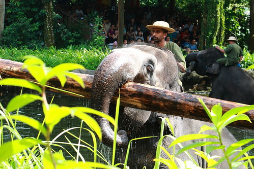 elephant show - strong trunk