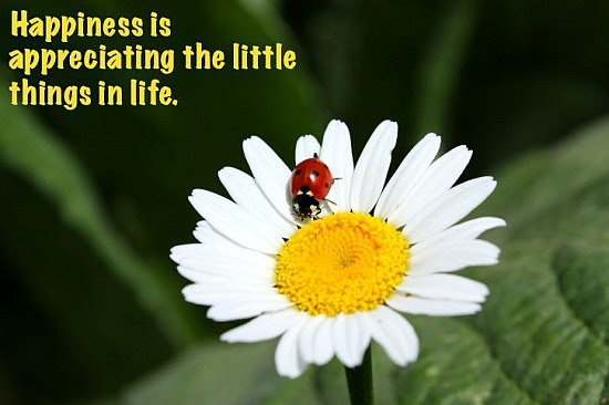 Appreciating The Little Things In Life Quote Picture