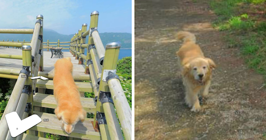 Dog Follows Street View Photographer, Photobombs Each And Every Photo