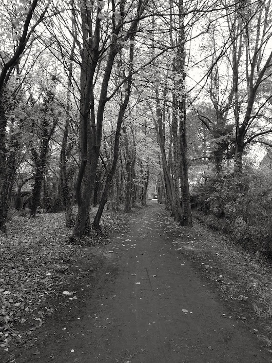 #Claudio #autumn #november #walk #trees #pathway #blackandwhite #bw