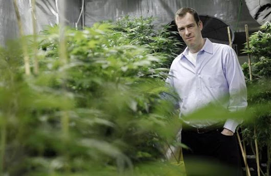 The art, and science, of growing medical marijuana - Metro - The Boston Globe