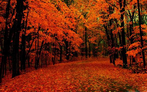 fall path mac wallpaper   mac wallpapers