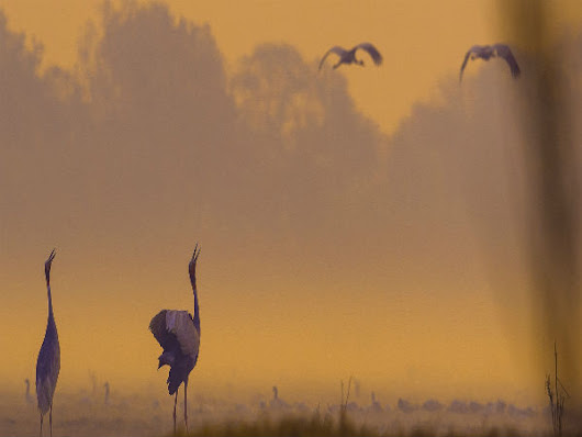 Enjoy The Tweeting Of Birds At The Keoladeo National Park - Nativeplanet