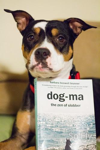 Dogma-0138