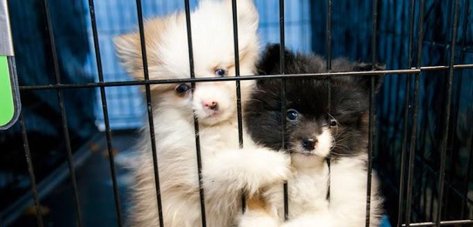 Una nueva ley obliga a las tiendas de mascotas a vender sólo animales rescatados de los refugios