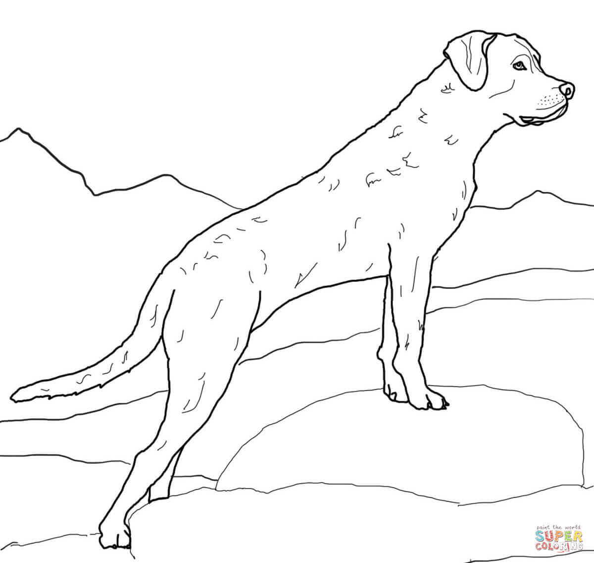 Chesapeake Bay Retriever Jagdhund