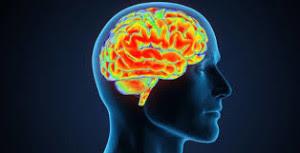 cabeça de lado com o cérebro aparecendo em um fundo preto com as áreas do cérebro marcadas em amarelo e vermelho
