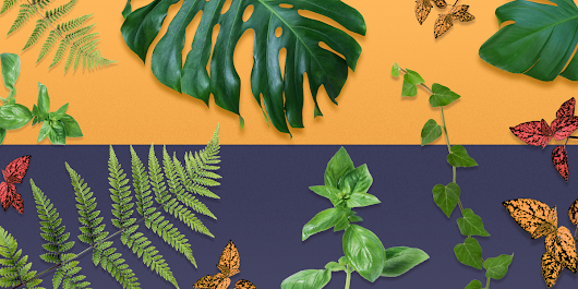 11 Mood-Boosting Plants That Will Actually Make You Happier at Home