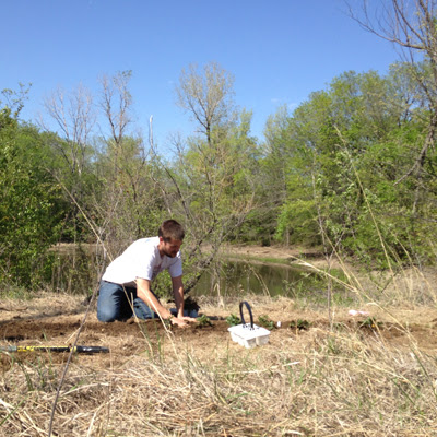 planting blackberries at the land