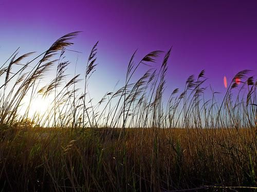 Purple breeze of change