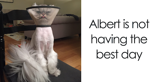 40+ Pets Who Just Came Back From The Vet, And Their Expressions Say It All