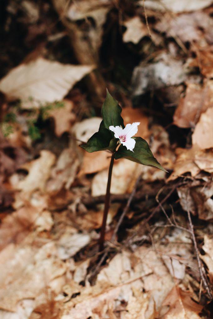 photo Orchid Grey Julie OBoyle Maine05_zpsnbmvsdvx.jpg