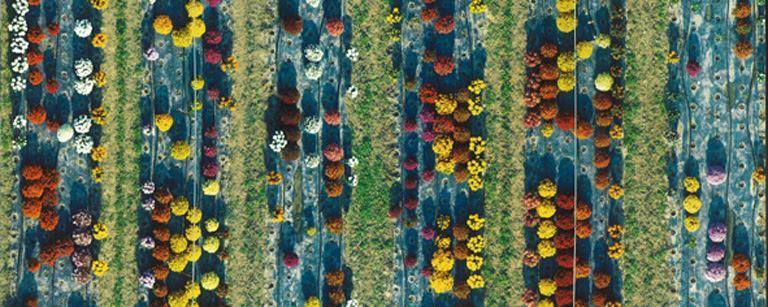 Jardineria-Paisaje-0708