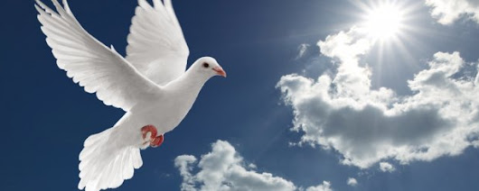 Dove Symbolism – Find the mysteries behind its Symbolism