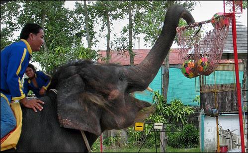 Elephant Playing Basketball