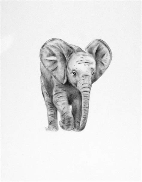 pencil drawings  baby elephants elephant art original