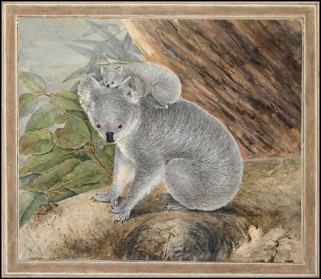 Koala and Young (1803)