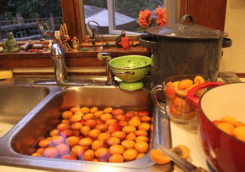 apricot processing