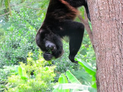 Why Howler Monkeys Howl & Other Animal Tales from Totoco - Jonathon Engels: A Life Abroad