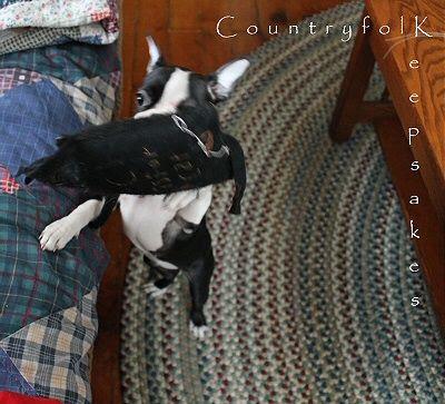 photo cat4_zps9d5d0a1e.jpg