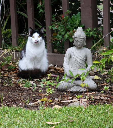 Tao of Meow