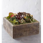 Flower Delivery by 1-800 Flowers Succulent Centerpiece