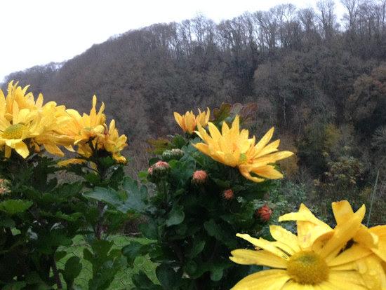 flowers-out-of-season.jpg