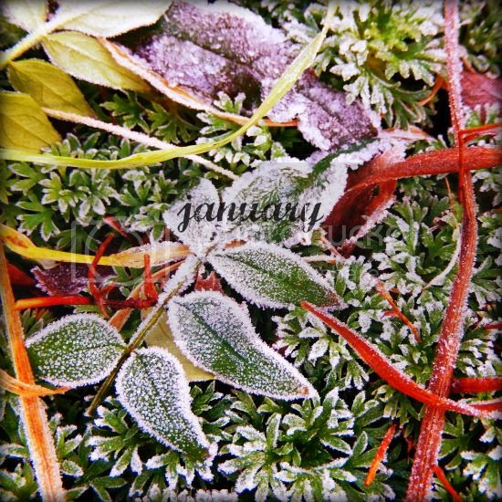 Jewelled Web - January 2015 - silver moss jewellery