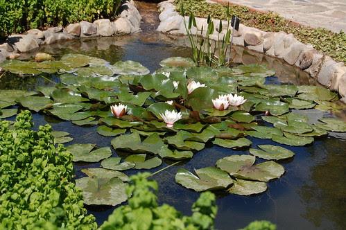 DSC_0395 El hogar de las ranas