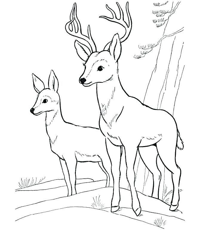 - Griffthispage: Wild Animal Coloring Sheets