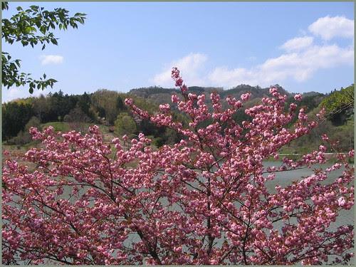 024 blossoms lake and sky