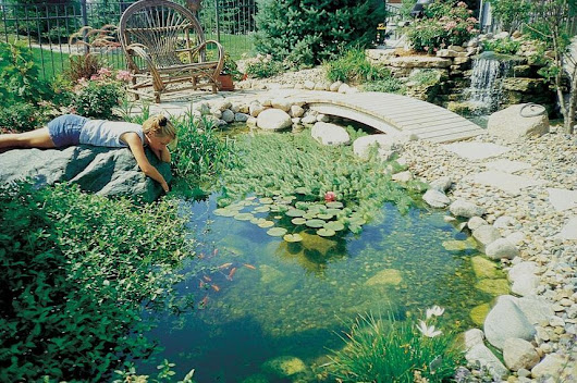 Breathe New Life Into Your Pond