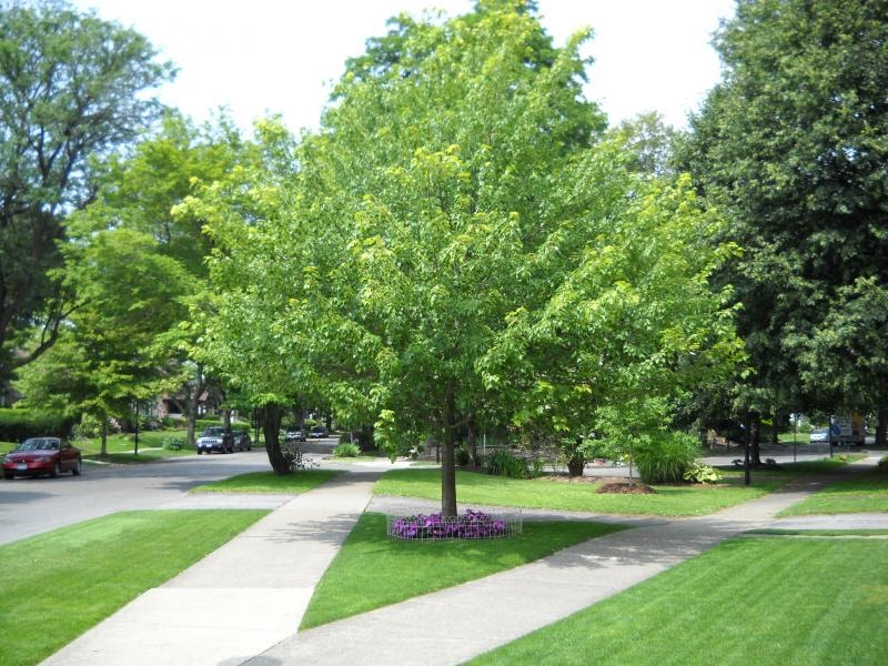 2 landscaping  landscaping ideas good front yard trees