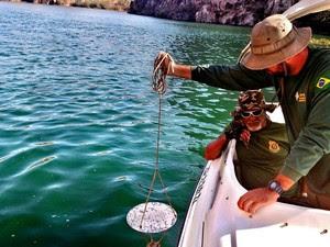 Técnicos coletaram amostras no rio (Foto: Divulgação/MP)