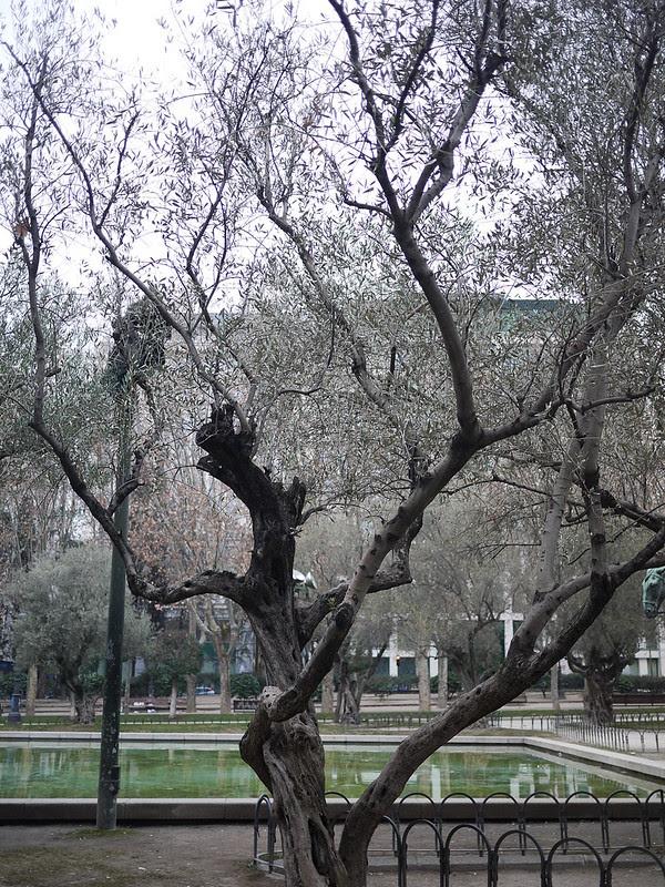 西班牙廣場 Plaza de España