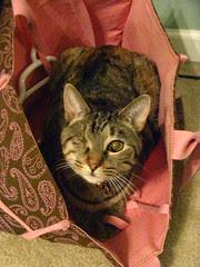 Maggie's bag