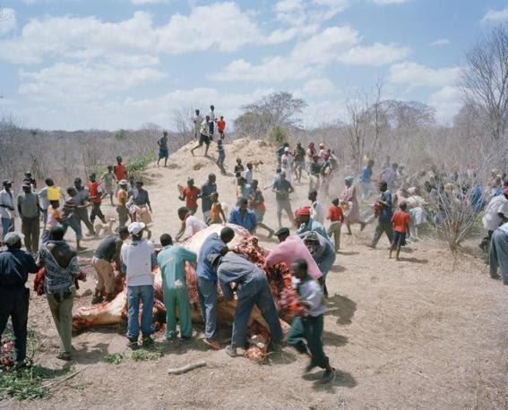 http://images.corriereobjects.it/gallery/Cronache/2010/03_Marzo/elefante/1/img_1/05_Elephant_Story-Copyright_David_Chancellor_672-458_resize.jpg
