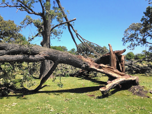Grayslake still cleaning up, adding up cost of tornado damage