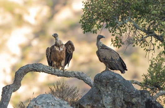 The top ten places in Andalucia for spotting animals