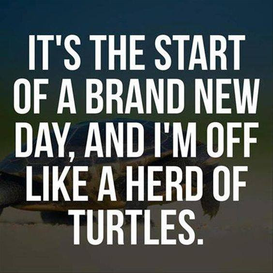Brand New Day Funny Pictures Quotes Memes Funny Images Funny