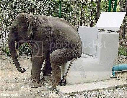 Elephant's Toilet - 11 Pictures, Images and Photos