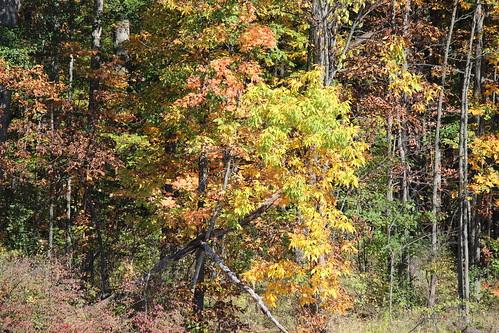 IMG_2856_Autumn_Leaves
