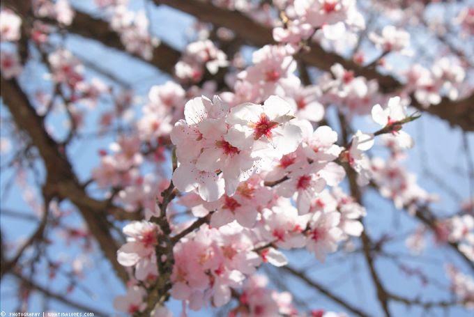 http://i402.photobucket.com/albums/pp103/Sushiina/cityglam/springoutfit2_zpsd6f57ded.jpg?t=1366059494