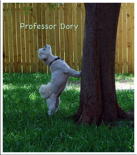 Professor-Dory
