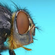 Extreme Macro – Mind-blowing Insect Photos by Johan J.Ingles-Le Nobel