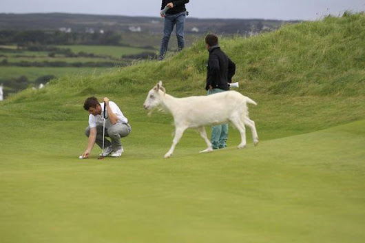 The Goats of Lahinch: A Lesson in Novel Research