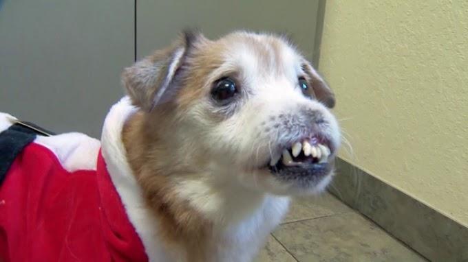 Esta es la historia de Sniffles, el perro sin nariz